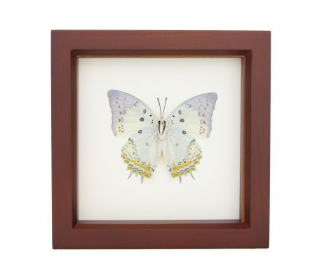 framed jeweled nawab butterfly brown frame