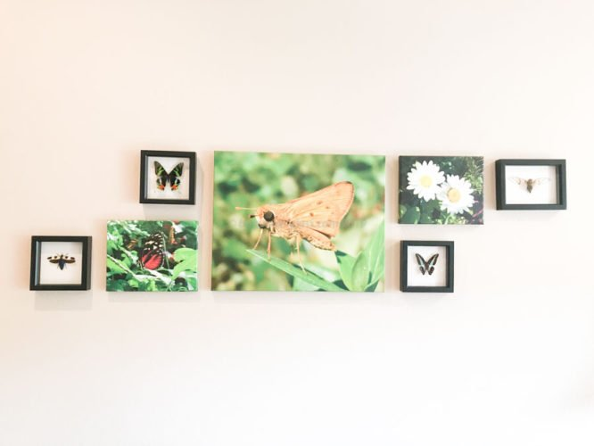 framed insects with photography