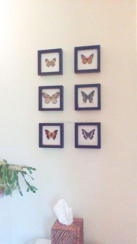 6 framed butterflies