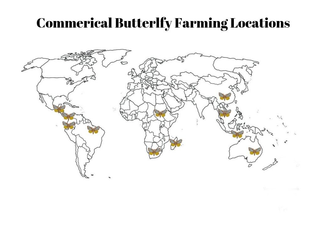 commercial butterfly farming operations