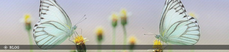 bug-banner-blog