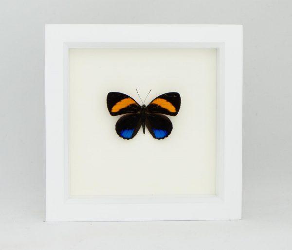 butterfly art decor frame