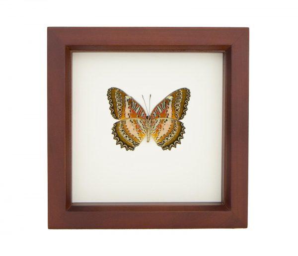 framed leopard lacewing butterfly