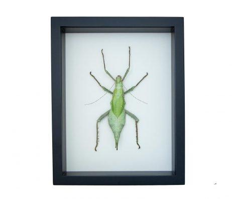 framed jungle nymph