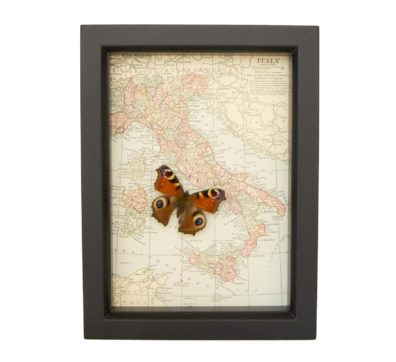 Framed Antique Map of Italy with Butterfly