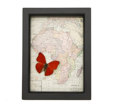 Framed Antique Map of Africa with butterfly