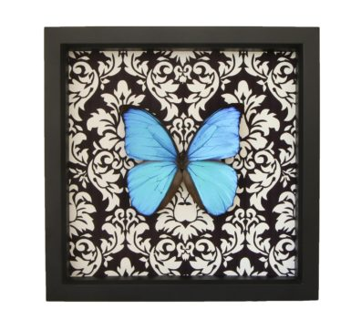 Blue Morpho Butterfly Damask Design