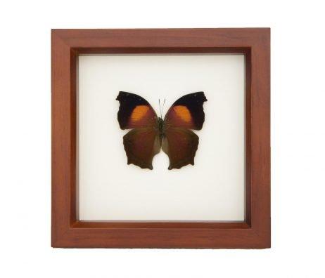 framed salamis cacta