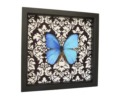 real blue morpho damask