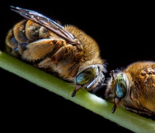 sleeping insects