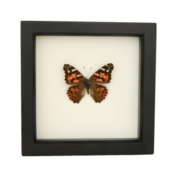 framed painted lady